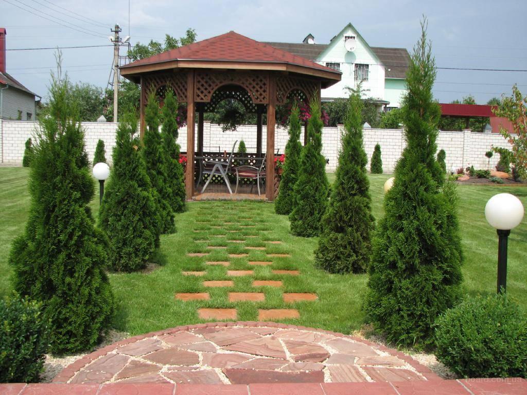 Озеленение дома фото